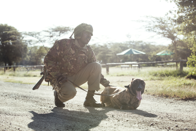 The KPR team at Ol Pejeta has a canine unit with highly trained handlers that work with assault, search and sniffer dogs.