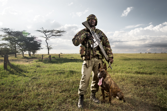 KPR Ranger, Paul Njogu, stands with assault dog, Madison at Ol Pejeta.  In 2015, Madison was donated to Mokomanzi conservancy in Tanzania after one of their dogs died from a snake bite.