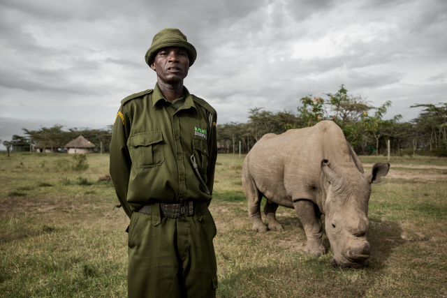 Sudan, the last male northern white rhino in the world, with one of his caretakers, Jacob Anampiu. Ol Pejeta Conservancy.